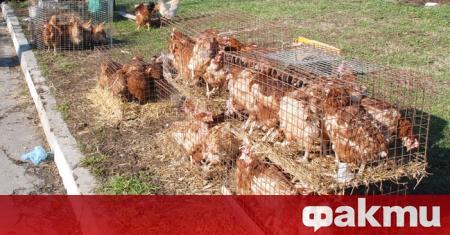 Огнище на птичи грип е открито във ферма за отглеждане