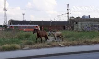 Екшън с коне в Пловдив (ВИДЕО)