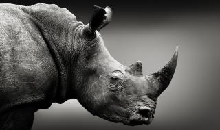 Светът е пред ново масово изчезване на видове