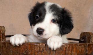 Здраво кученце се роди с 6 крака и 2 опашки (СНИМКА+ВИДЕО)