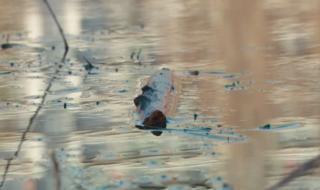 5000 лева глоба за нефтения разлив в притока на Марица