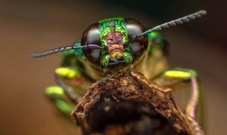 Иде апокалипсис за насекомите