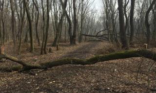 11-годишен издъхна, смазан от отсечено дърво