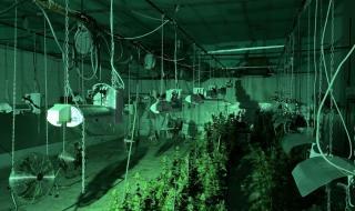 Разкриха две оранжерии за марихуана в Ловешко