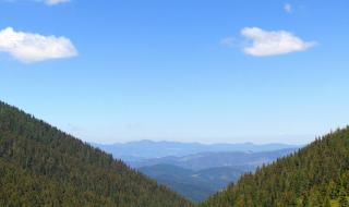 Проблемът с гората над Црънча и какво искат местните