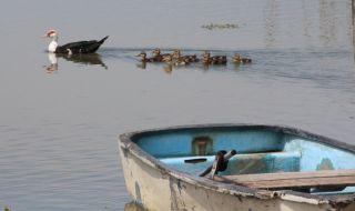 Заловиха бракониер, влязъл с лодка в езерото