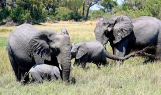 Вижте къде разрешиха лова на слонове