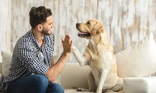 Кучетата, откриващи коронавируса във Финландия, бяха признати за герои