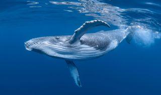 Откриха 16 кг пластмаса в стомаха на кит
