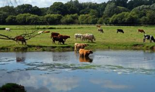 Има резултати от загиналите крави, но няма да ги съобщят