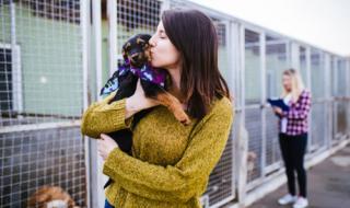 Карантината увеличи с 30% осиновяванията на кучета