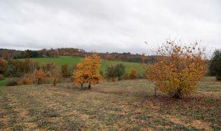 Франция засажда милиони дървета