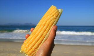 Опасна ли е варената царевица от плажа? - 1