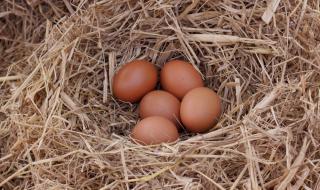 Кокошка снесе яйце с датата на Апокалипсиса (ВИДЕО)