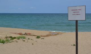 Пристигнаха първите туристи по Северното Черноморие