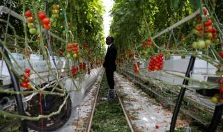 ЕС спира субсидии за олигарси