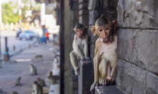 16-годишен пусна на свобода 70 маймуни