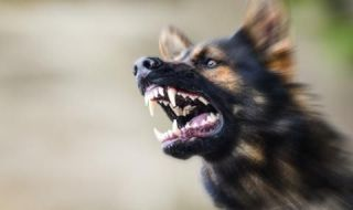 Куче нахапа дете по лицето - 1
