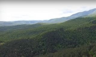 Пеевски се намеси в спора за гората на Црънча