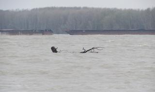 Нивото на Дунав край Ново село се вдигна с близо метър
