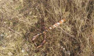 Поредна нагла кражба в междугарието Долна Митрополия -Сомовит