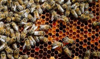 Нова е-платформа ще уведомява пчеларите за пръскания с химикали
