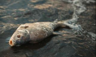 Ето какво е отровило рибата в Марица