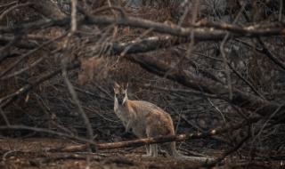 Бури потушиха пожари в Австралия