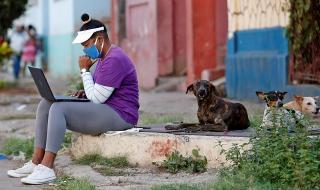 Доказано: кучета могат да надушват Ковид-19