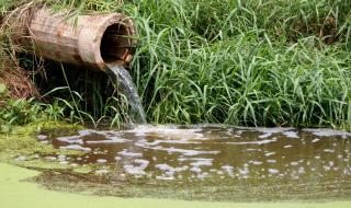 Кравеферма изсипва фекалии в язовир край Омуртаг