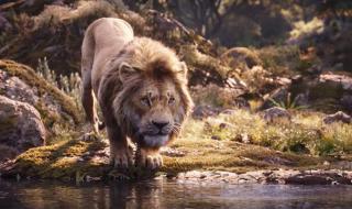 Царят на джунглата се завърна! (ВИДЕО)