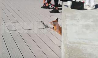 Лисица се появи пред столичен мол  - 1
