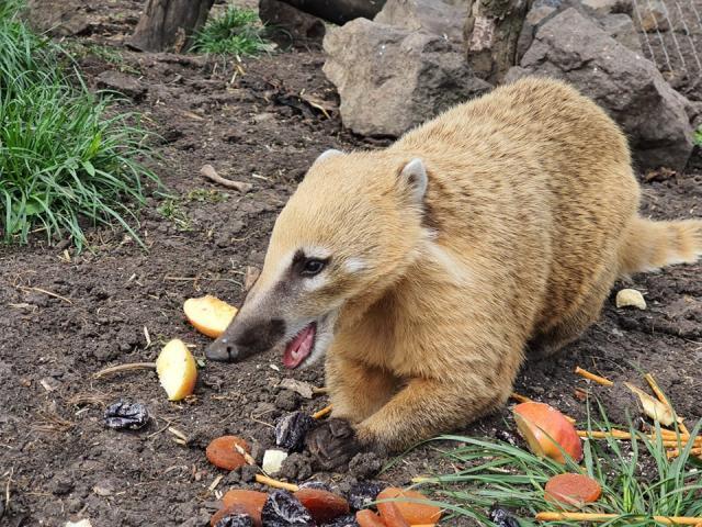 Четири носати мечета се родиха в зоопарка в Бургас