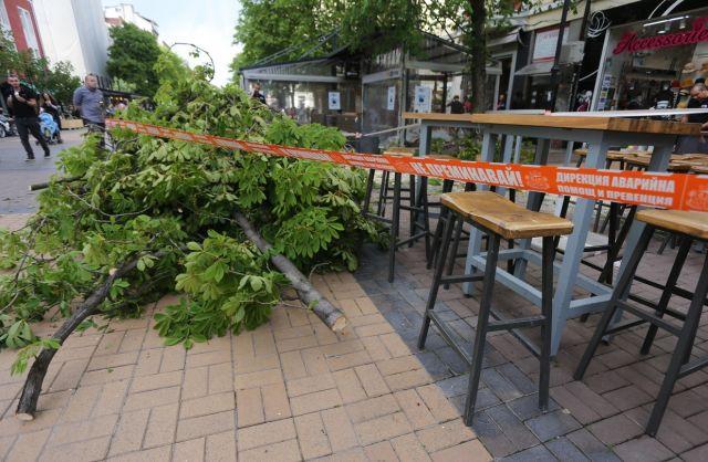 Огромно дърво падна на централен булевард (СНИМКИ)