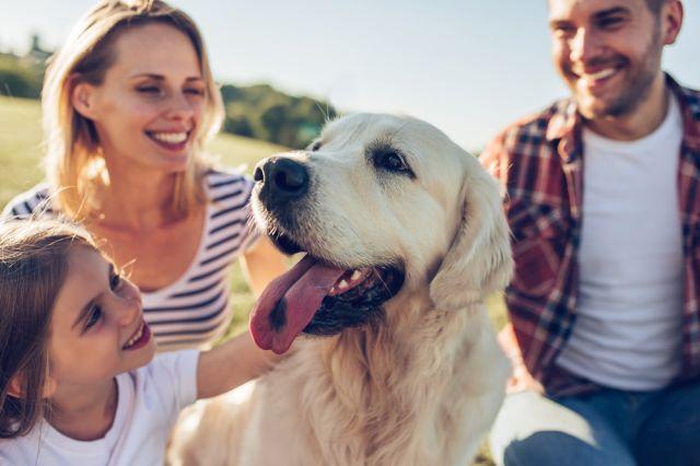Световен ден на кучето: Любопитни факти за най-добрия приятел на човека