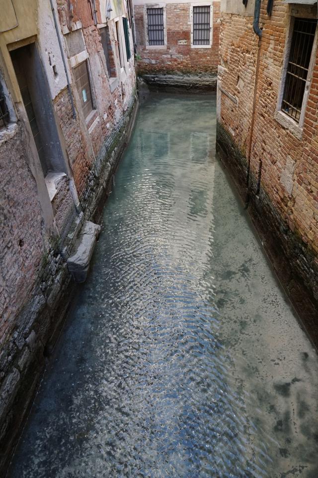 Огромна медуза се появи в каналите на Венеция (ВИДЕО)