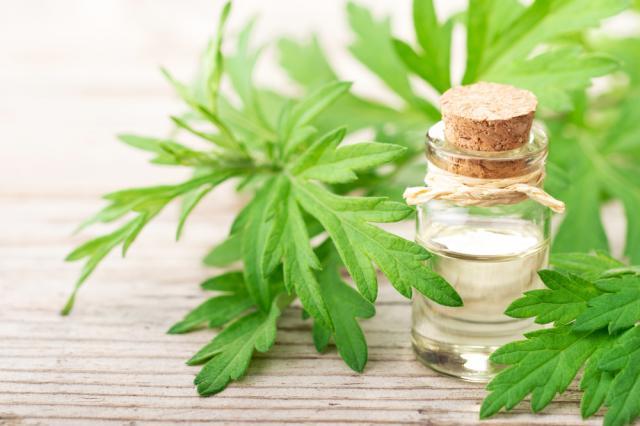 Най-вредните билки, които използваме ежедневно