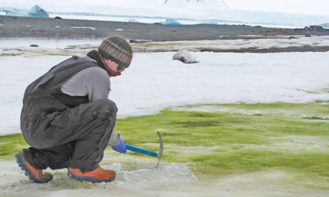 Антарктика ще стане зелена (ВИДЕО)