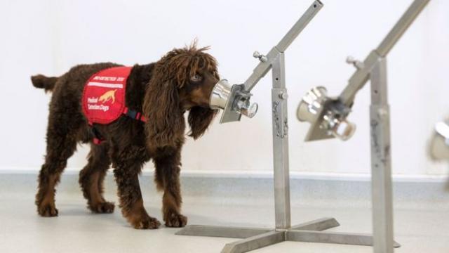 Могат ли кучетата да надушват коронавируса?
