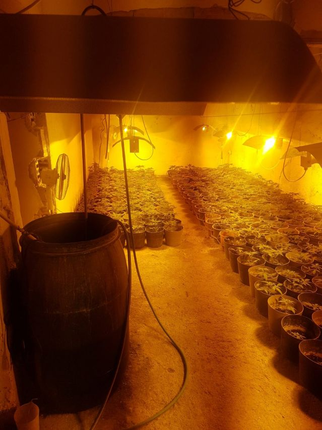 Разкриха огромна наркооранжерия в Бойчиновци