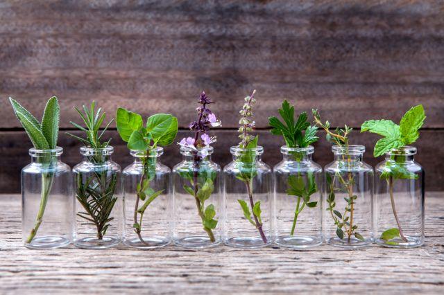 Teзи билки пазят дихателните пътища от инфекции като COVID-19