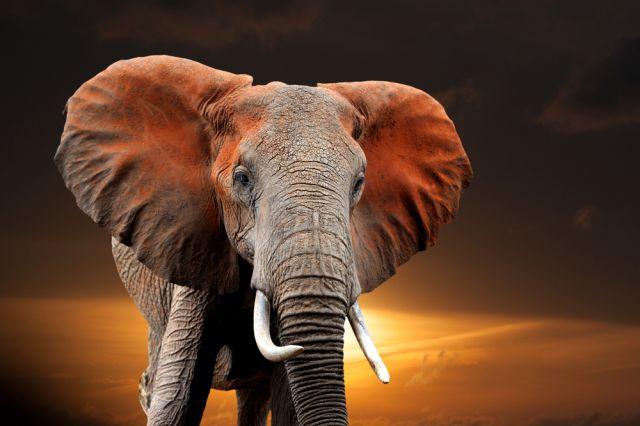 Животните, които обитават Земята по-дълго от хората