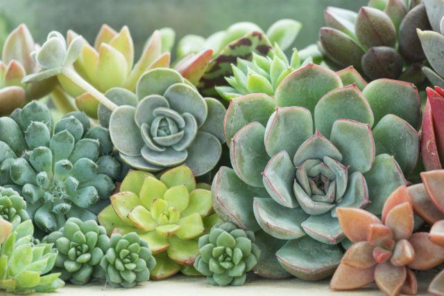 3 растения у дома привличат парите