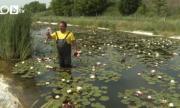 Бивш военен направи първата ферма за водни лилии в България