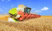 За първи път в света! Аржентина одобри отглеждането на генно-модифицирана пшеница