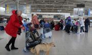 Кипър спря полетите, включително и от България