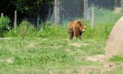 Разрешиха отстрелването на три проблемни мечки в Смолянско