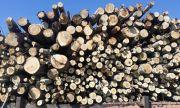 Спипаха бракониери, отсекли 25 кубика дървесина в Шуменско