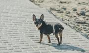 Стопанин под карантина изпрати кучето си до магазина (СНИМКА)