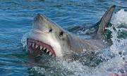 Ето как сърфист се спаси от кръвожадна бяла акула (СНИМКА)